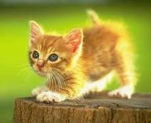 Unduh 67+  Gambar Kucing Sketsa Berwarna Terbaik